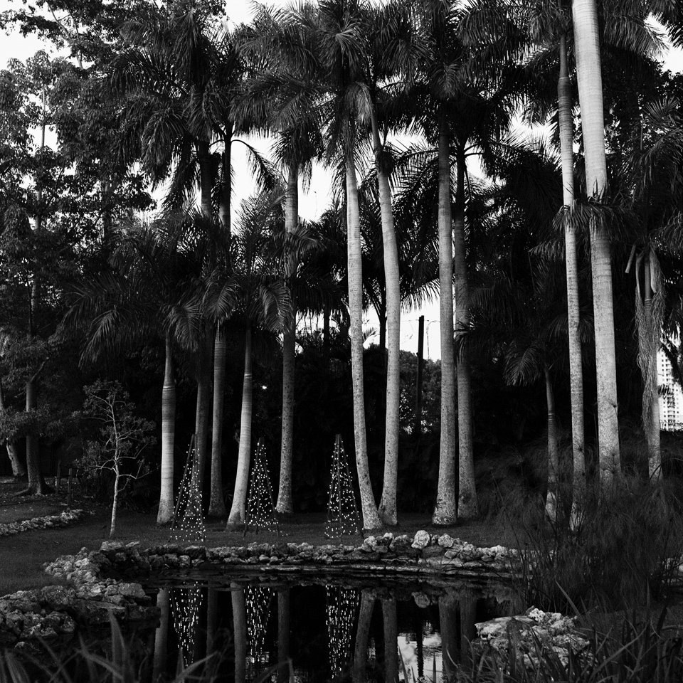 Three trees at the Edison House Fort Meyers, FL |2013