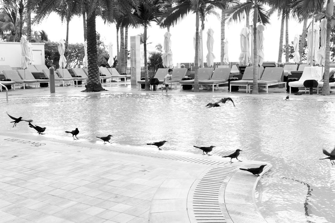 week46 pamelajoye around the pool - florida.jpg