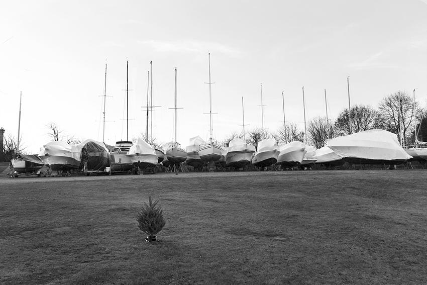 week49 pamelajoye - tree and  boats- massachusetts.jpg