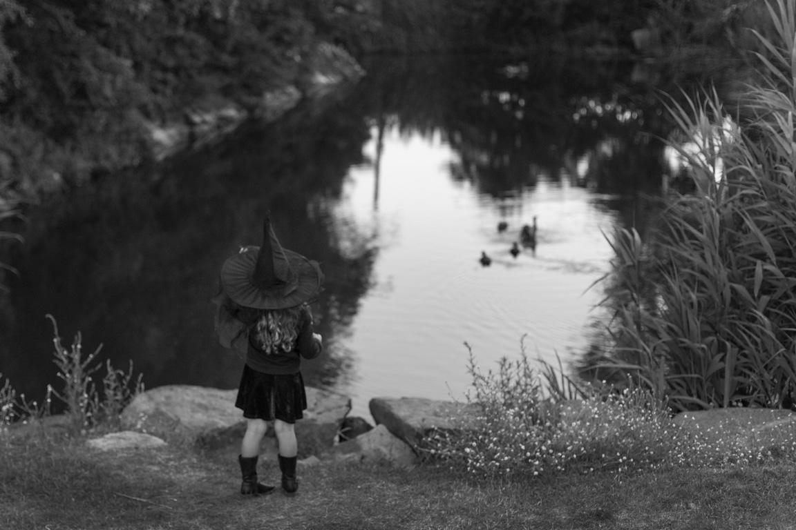 Imagining Ducklings – Marsh Moat, 2015
