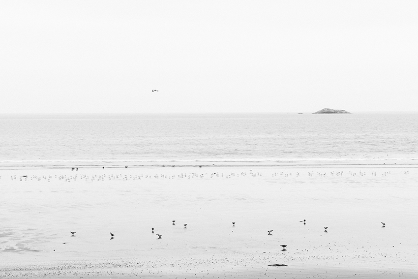 week40-pamelajoye-the day there were hundreds of birds - massachusettes.jpg