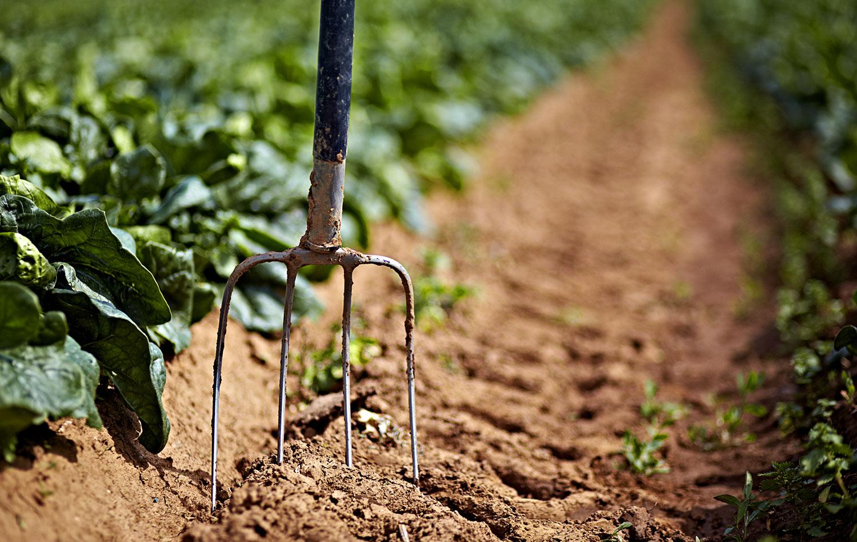 Kylie-Grinham-Melbourne-Photographer-Pitchfork-Spinach-farming.jpg