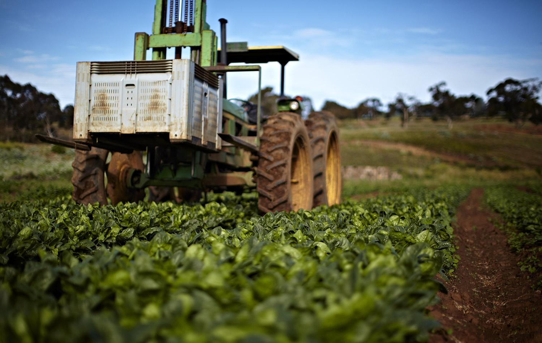 Kylie-Grinham-Tractor-Harvest-time-on-farm.jpg