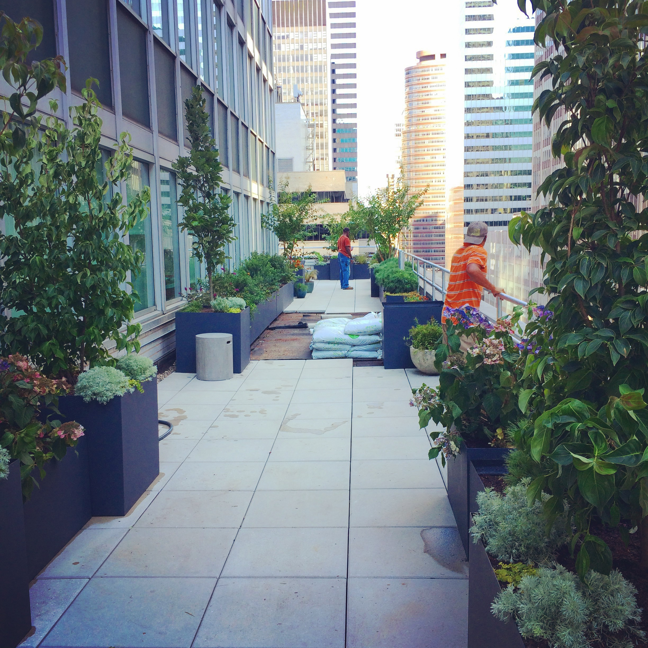 Installation of rooftop garden in midtown Manhattan. The central area, with pavers removed, will soon be green roof.