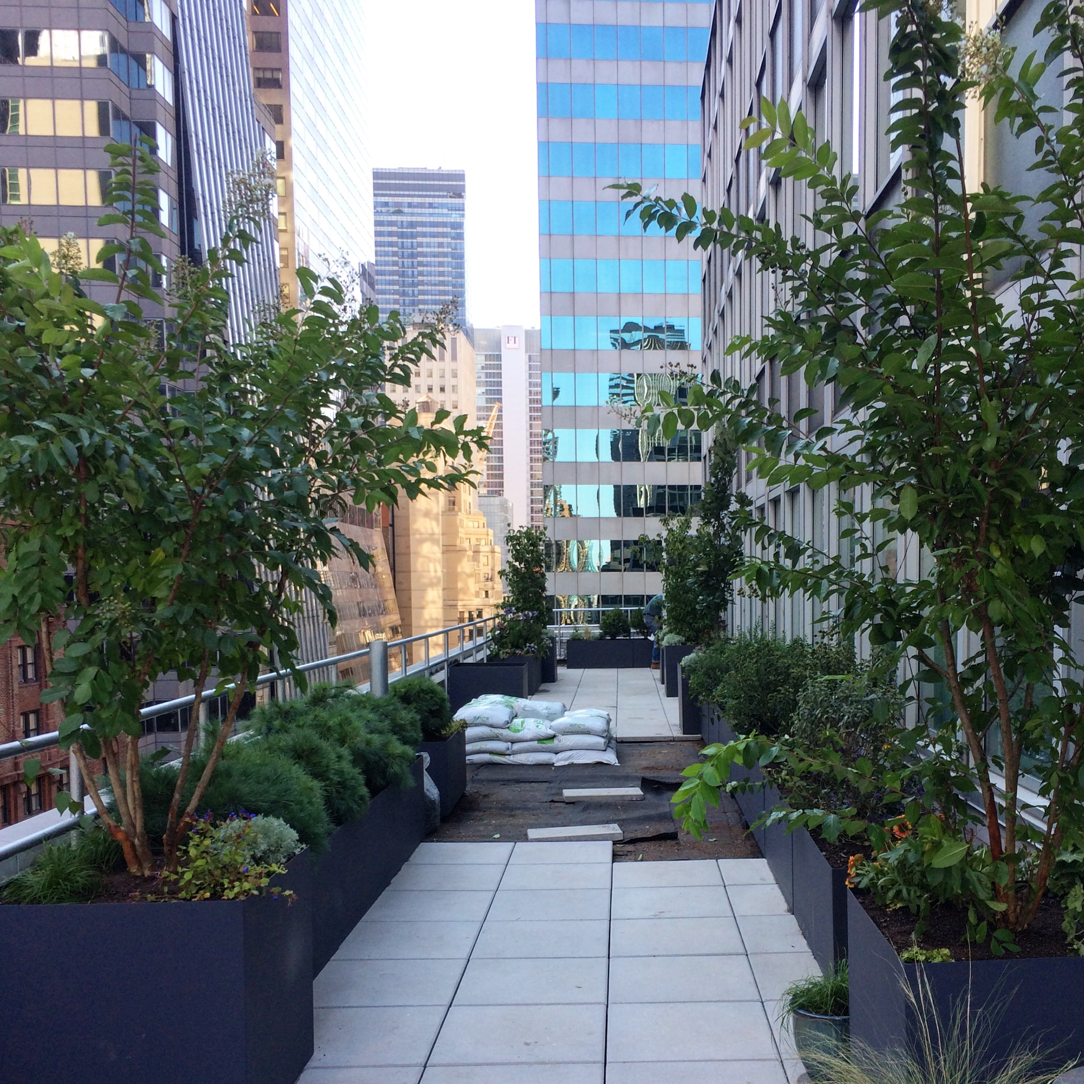 Planting and green roof installation underway on 16th floor roof terrace on Park Avenue in midtown Manhattan.