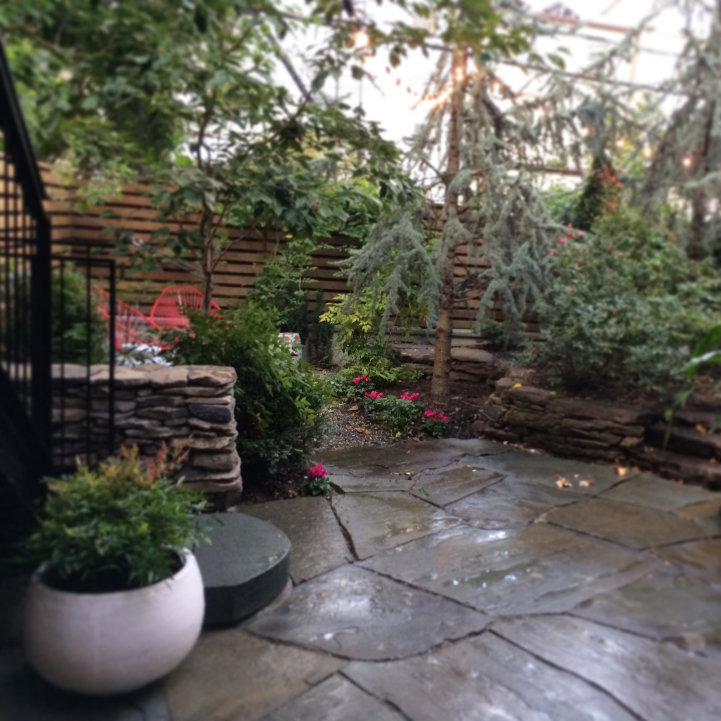 "Backyard garden in Carroll Gardens has new bluestone terrace, flight of stairs, stone wall, gravel ""secret"" garden area, and plantings."