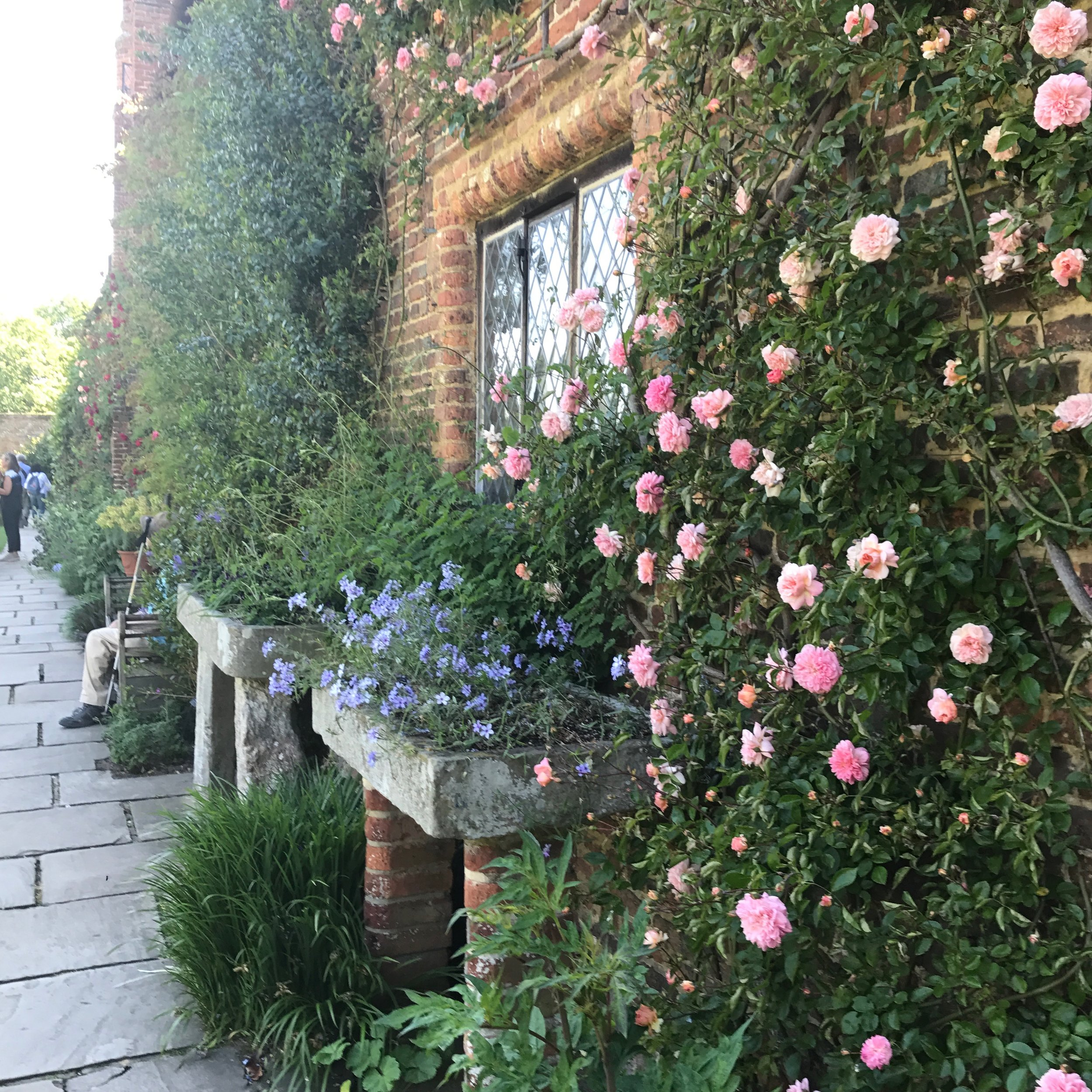 Climbing roses at Long Barn, Sissinghurst Gardens.