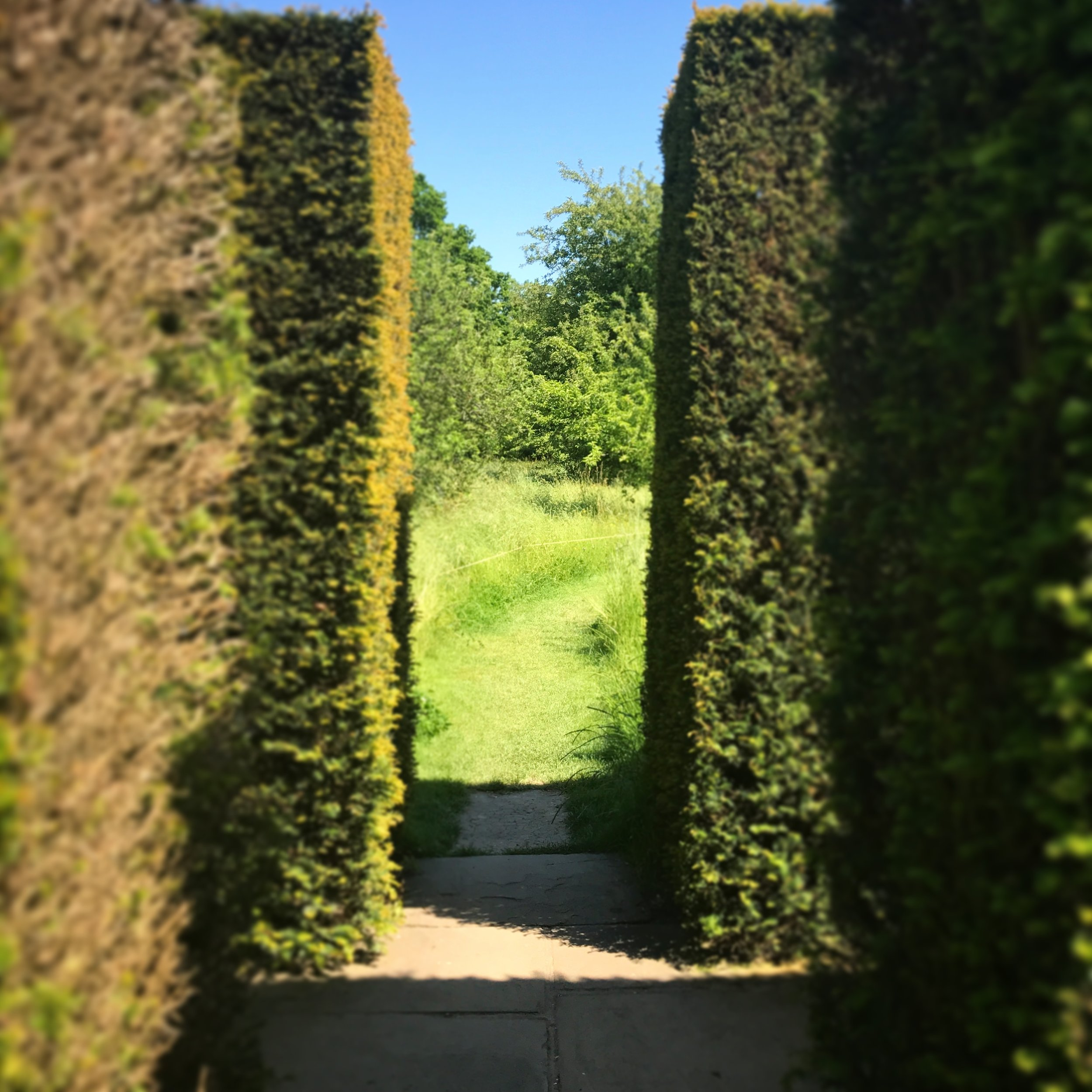 """Yew hedges separate the formal garden from the meadow. There is also a """"hallway"""" of the hedges such that you can turn right, here, and walk to another room of the garden."""
