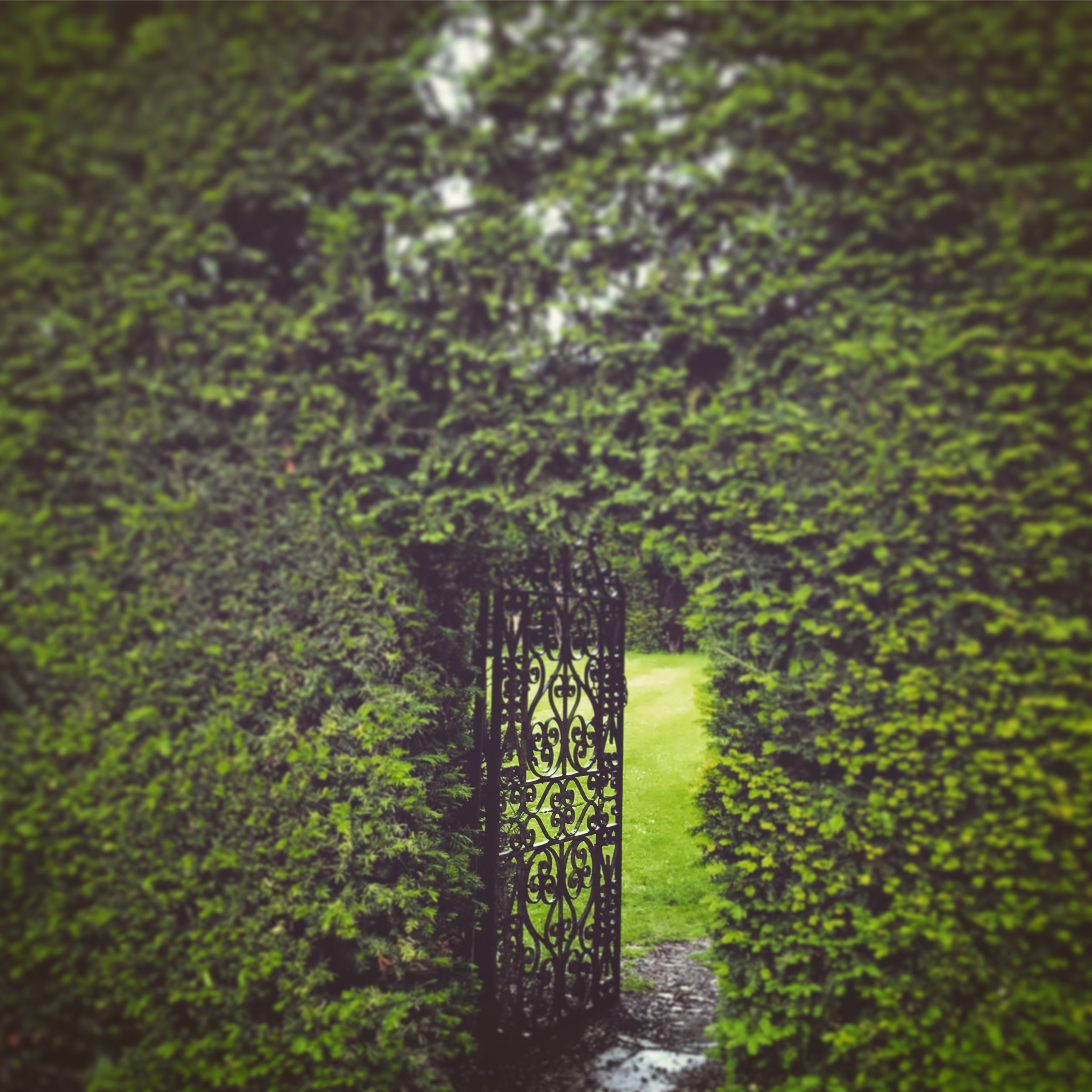 Gate in an ancient yew hedge at Levens Hall, England's oldest garden.