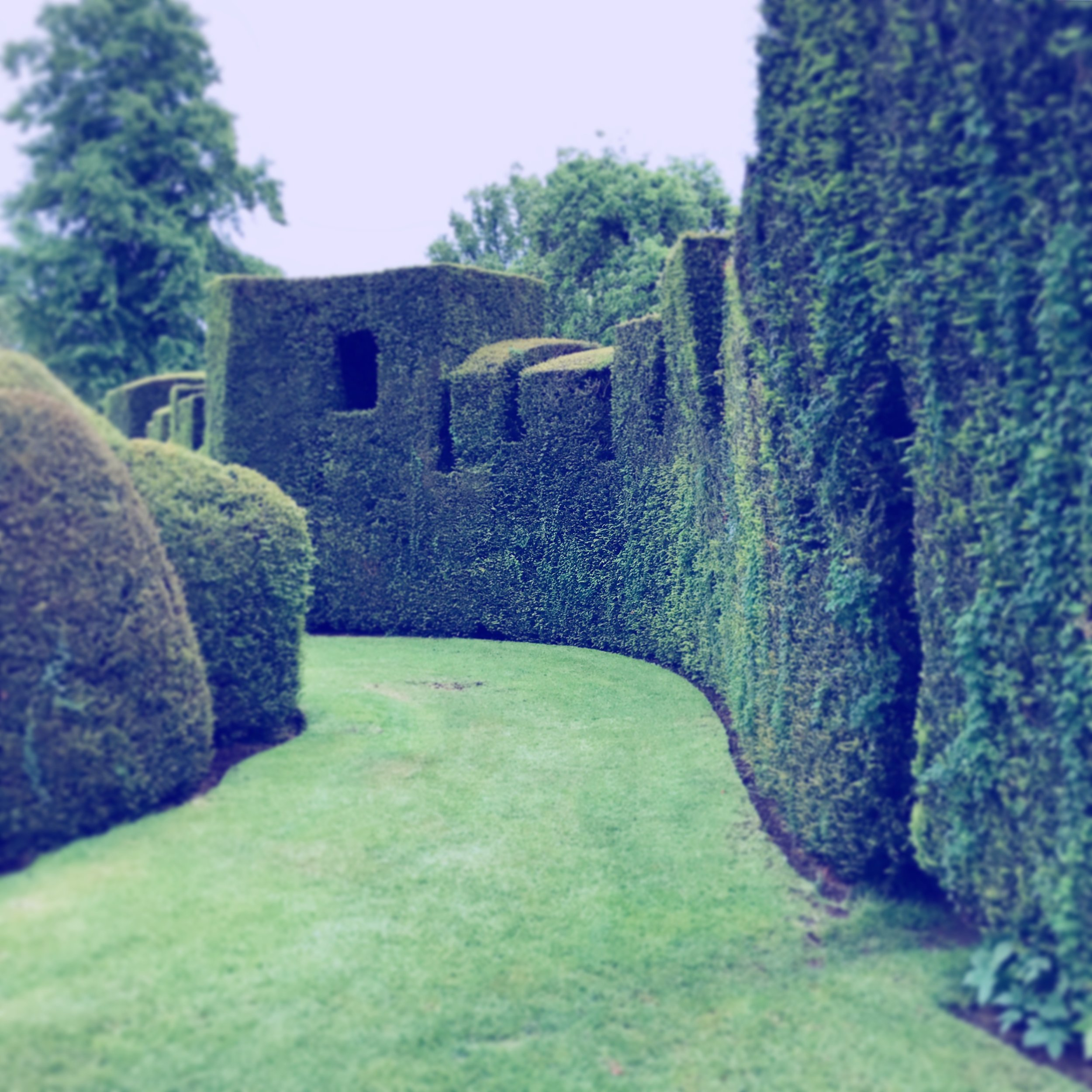 Levens Hall, yew hedge (windows, crenellations, and doorway).