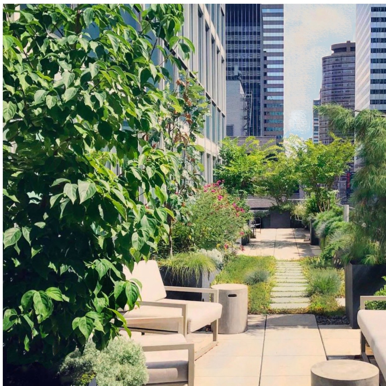 Midtown office garden, 16th floor, 1 year after planting.
