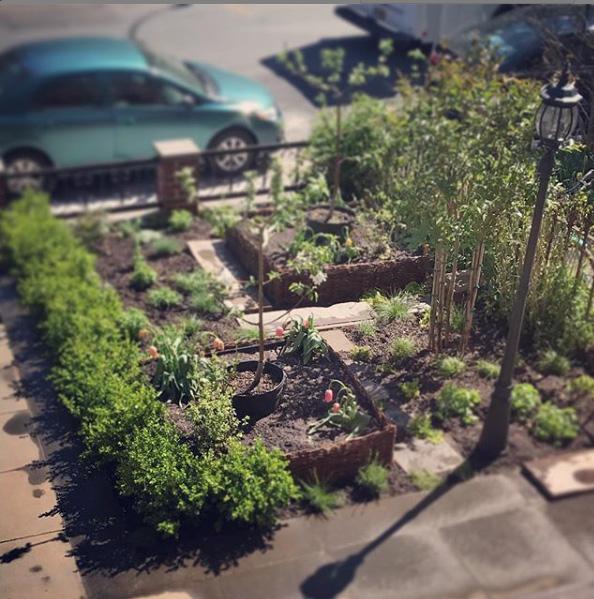 Potager and perennials garden after.jpg