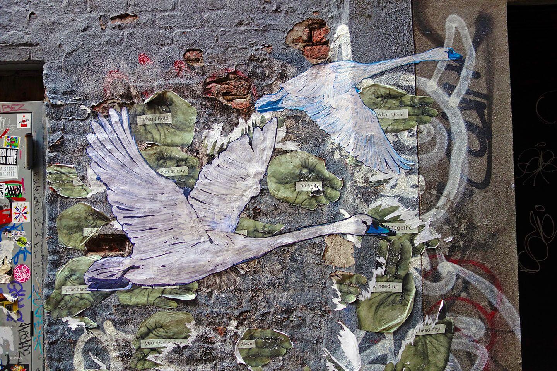 Swan Seeking Refuge, Freemans Alley, NYC