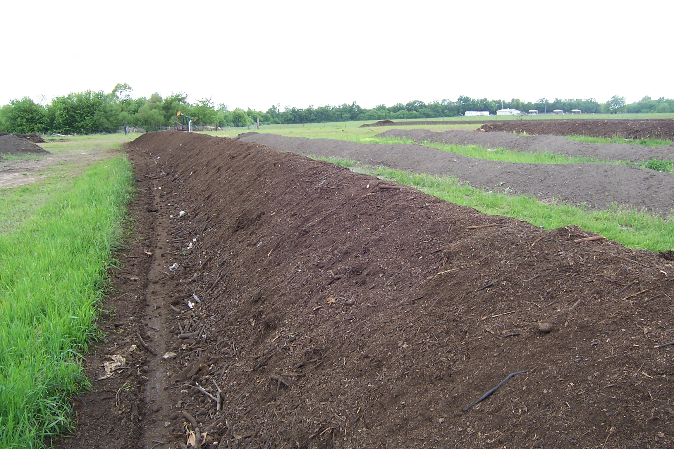 Curing stage before compost enters the screener
