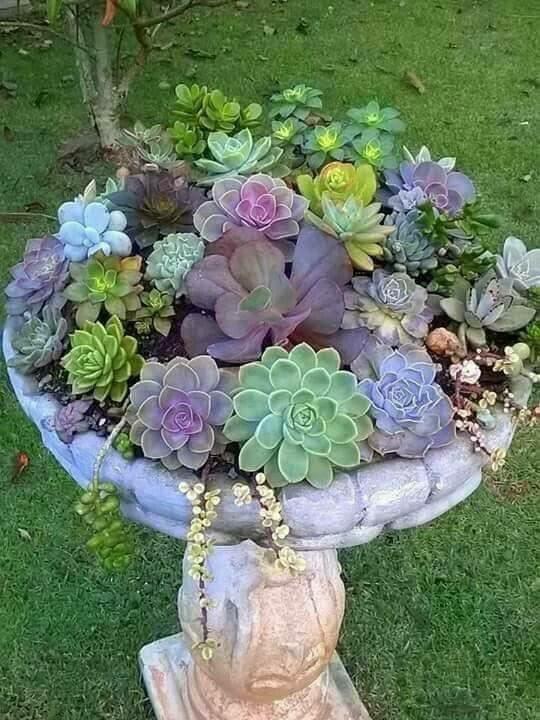Succulents in an old birdbath ... beautiful.