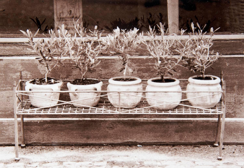 Potted Plants - View 2 (L'Isle sur la Sorgue, France)