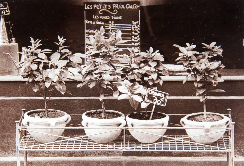 Potted Plants - View 1 (L'Isle sur la Sorgue, France)