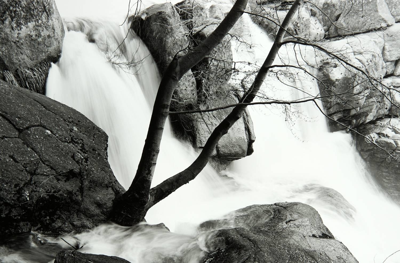 Tree on Cascade Creek (Yosemite National Park)