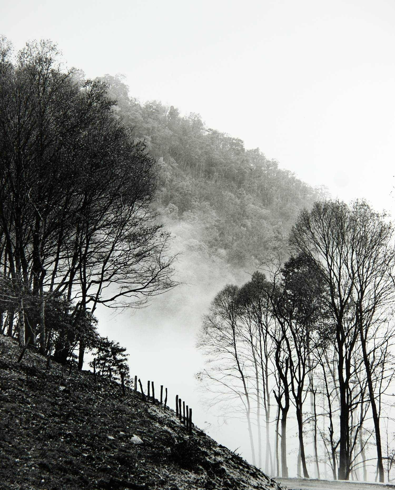 Fog on Beaverdam Road (North Carolina)