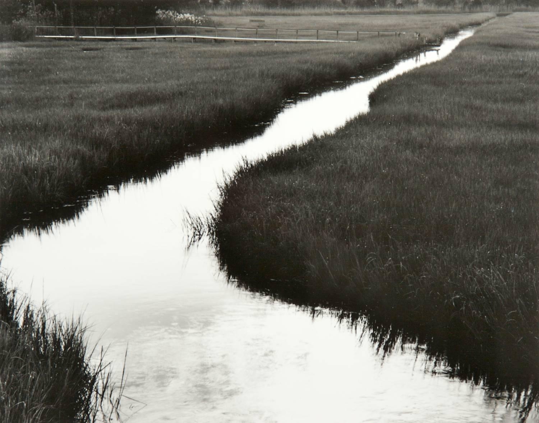Wetland Stream (Lewes, Delaware)