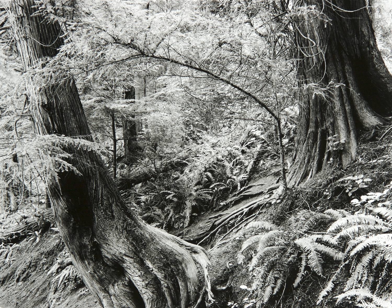 Deception Pass Forest (Washington)
