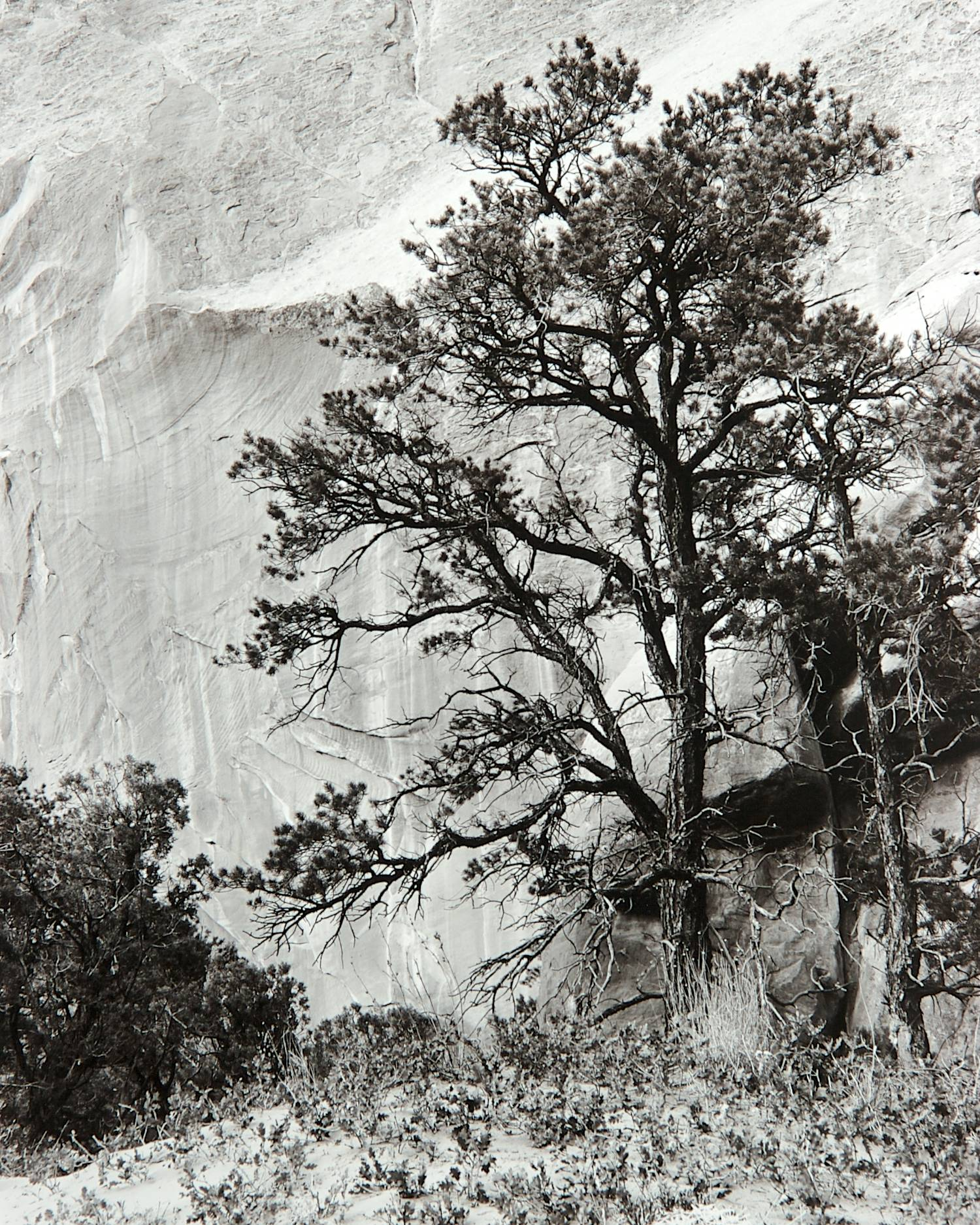 Tree & Rock Face (Arches National Park)