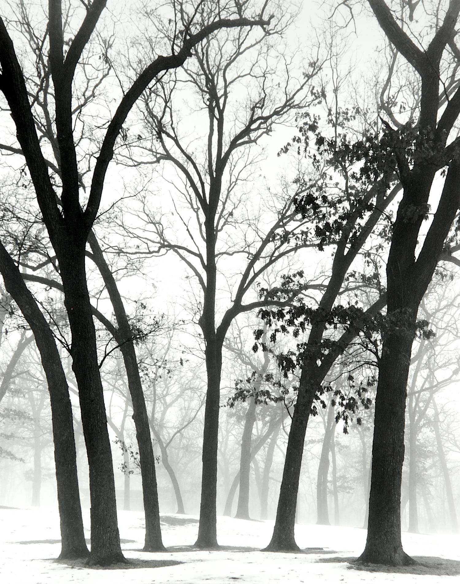 Trees in Fog (Green Lake, Wisconsin)
