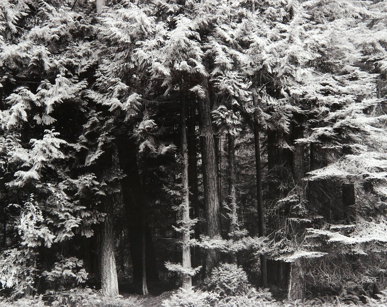 Whidbey Island Grove (Washington)