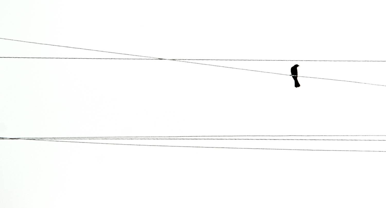 Bird on Wire (Colorado)