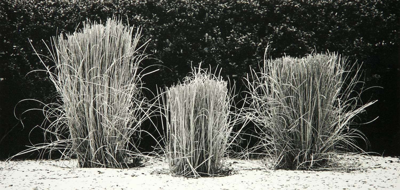 Grass (New York City)