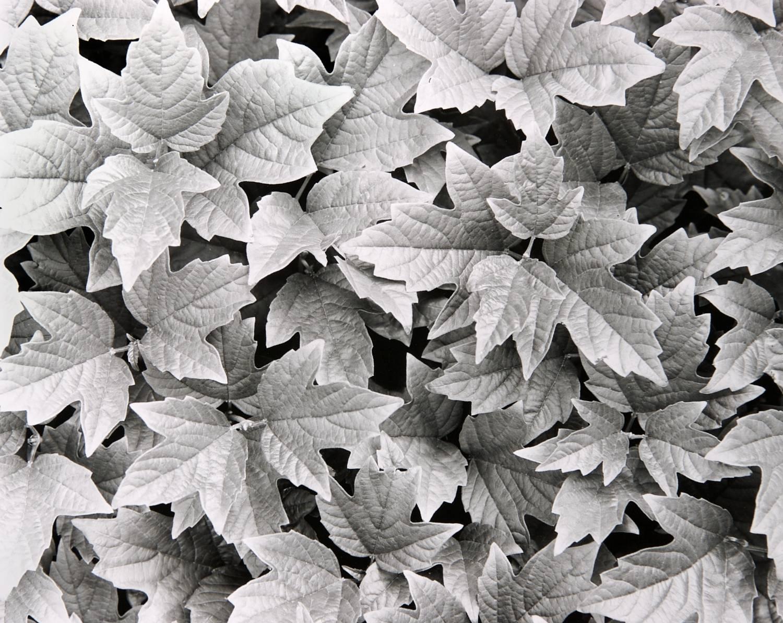 Ivy (Susan's Garden Series, Colorado)