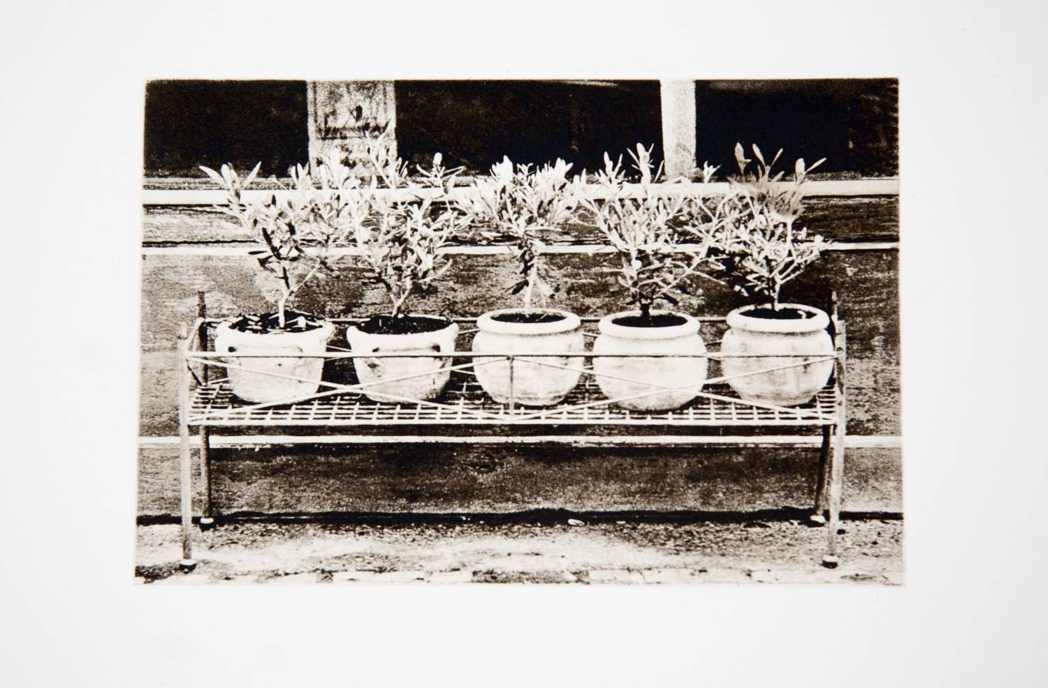 Potted Plants View II (France)