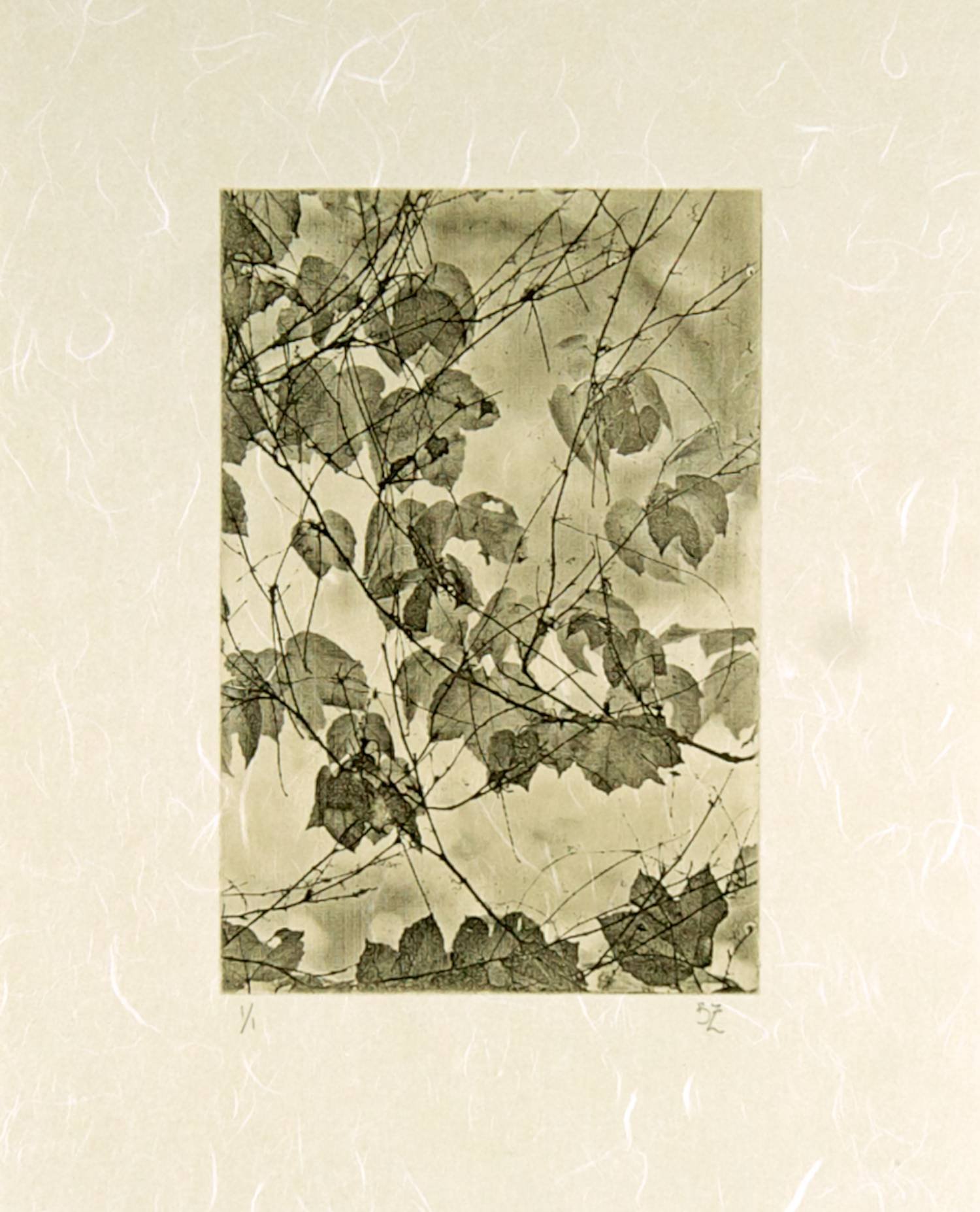Ivy chine-collé (white)