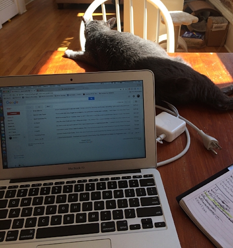 My cat Ellie is such a micromanager. Now if only I could teach her to answer emails.