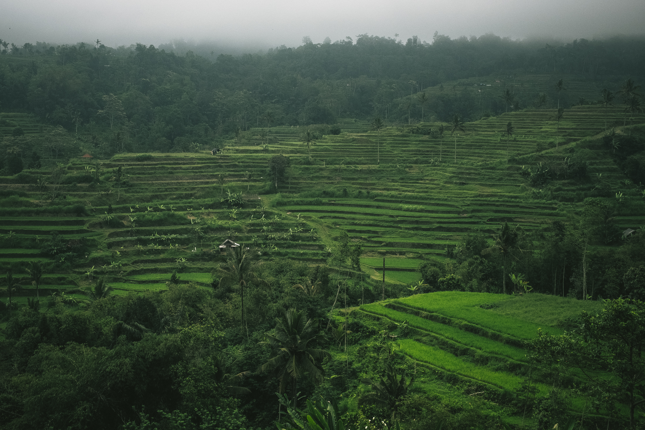 Jatiluwih - At the foot of Mount Batukaru is the largest rice terrace in Indonesia.