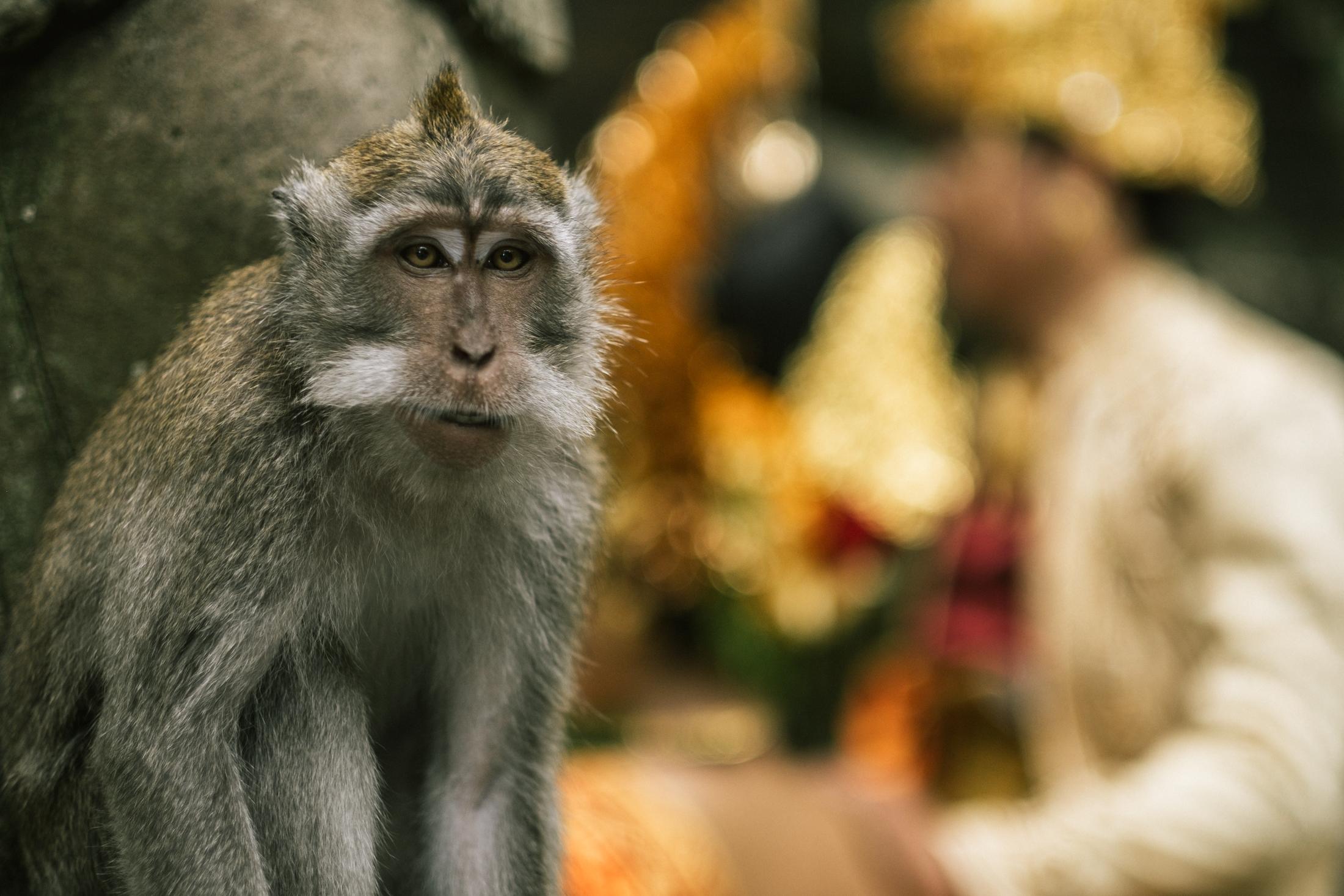 bali_day9_monkey-1.jpg