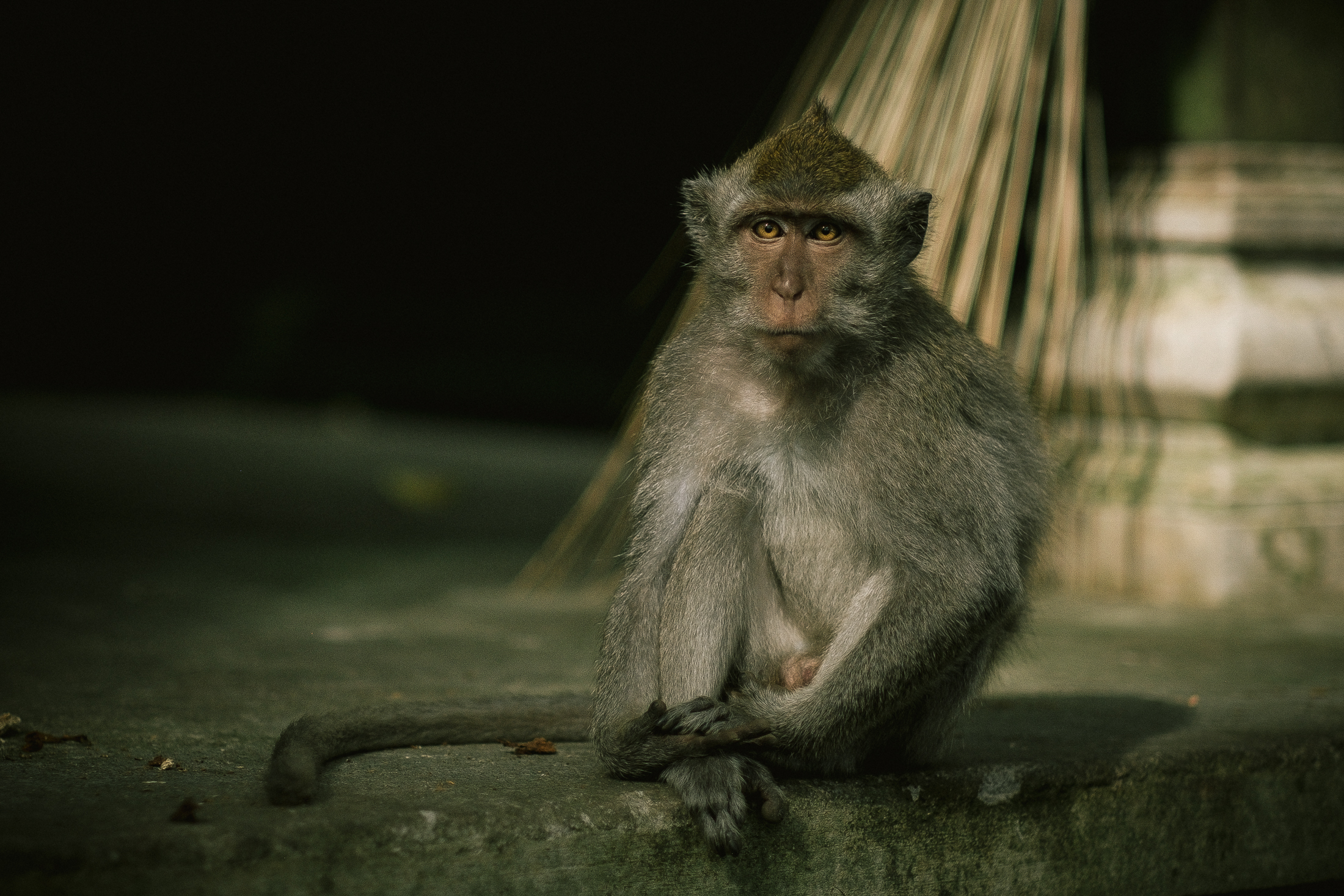 bali_day9_monkey-5.jpg