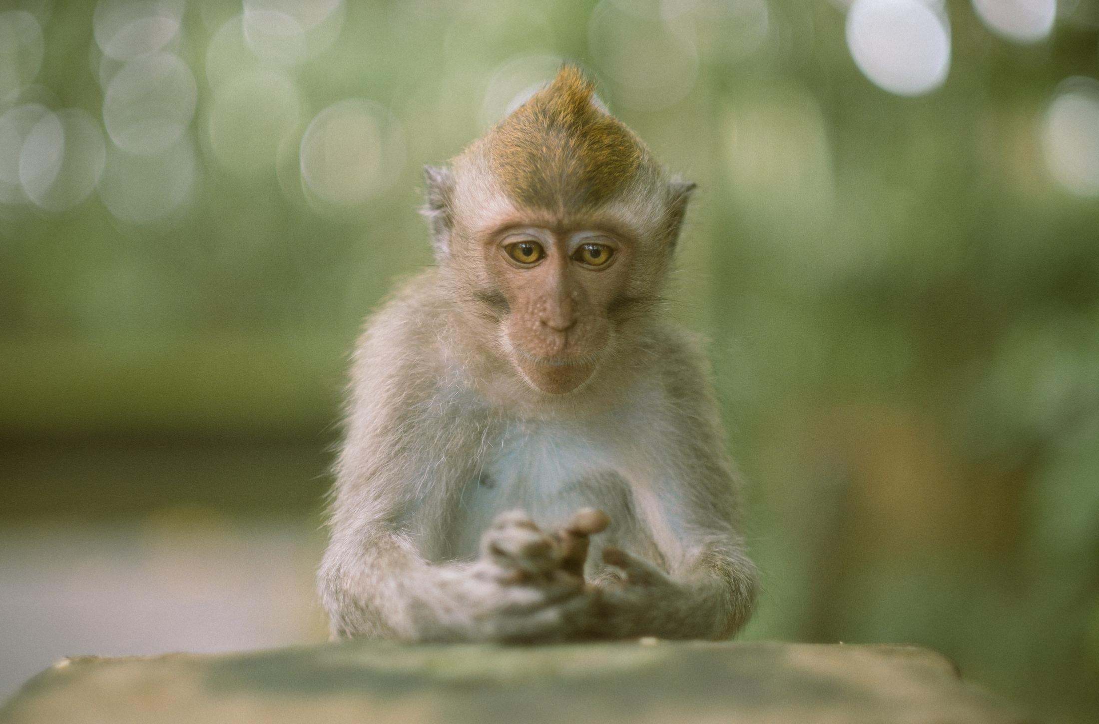 bali_day9_monkey-16.jpg