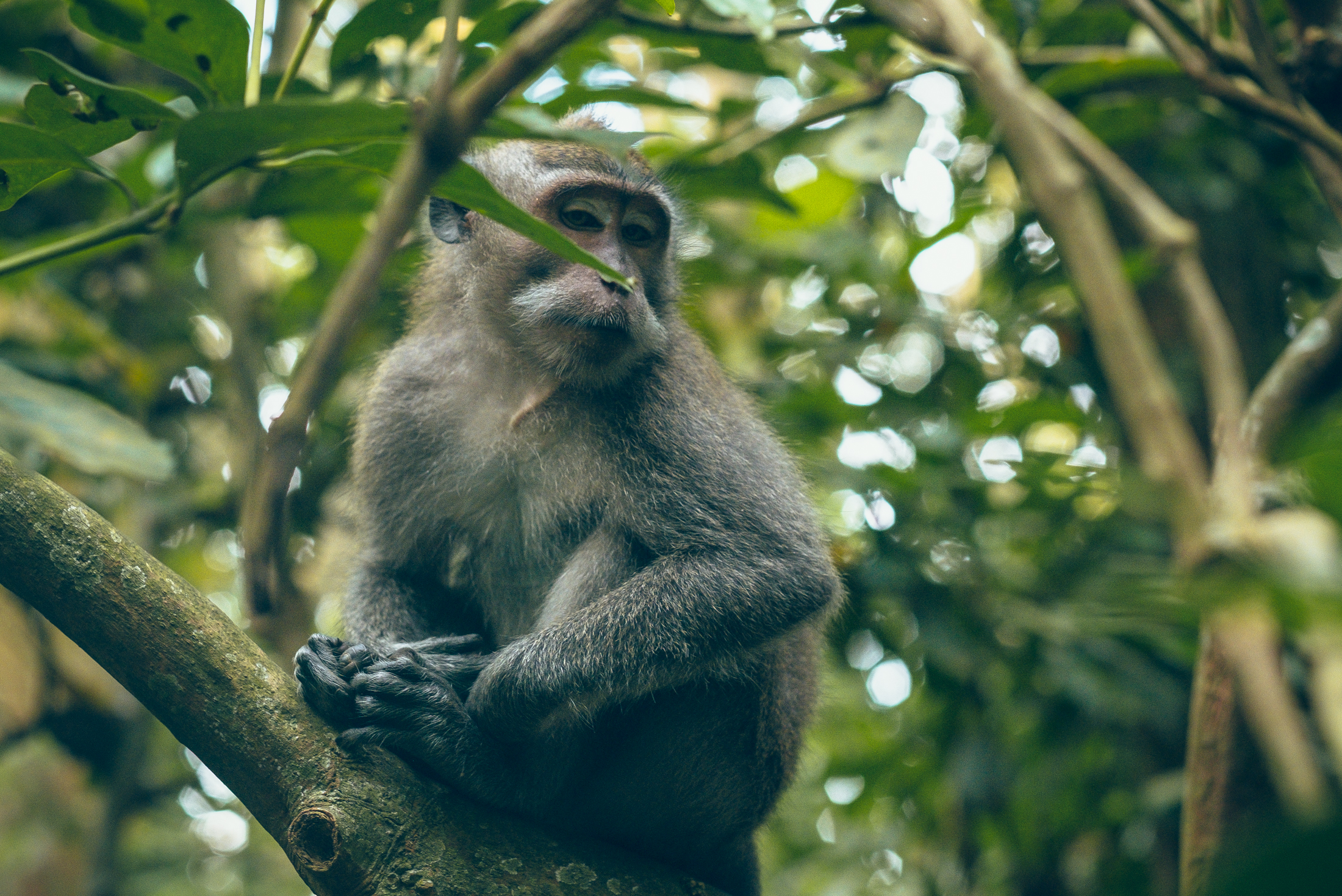 bali_day9_monkey-21.jpg