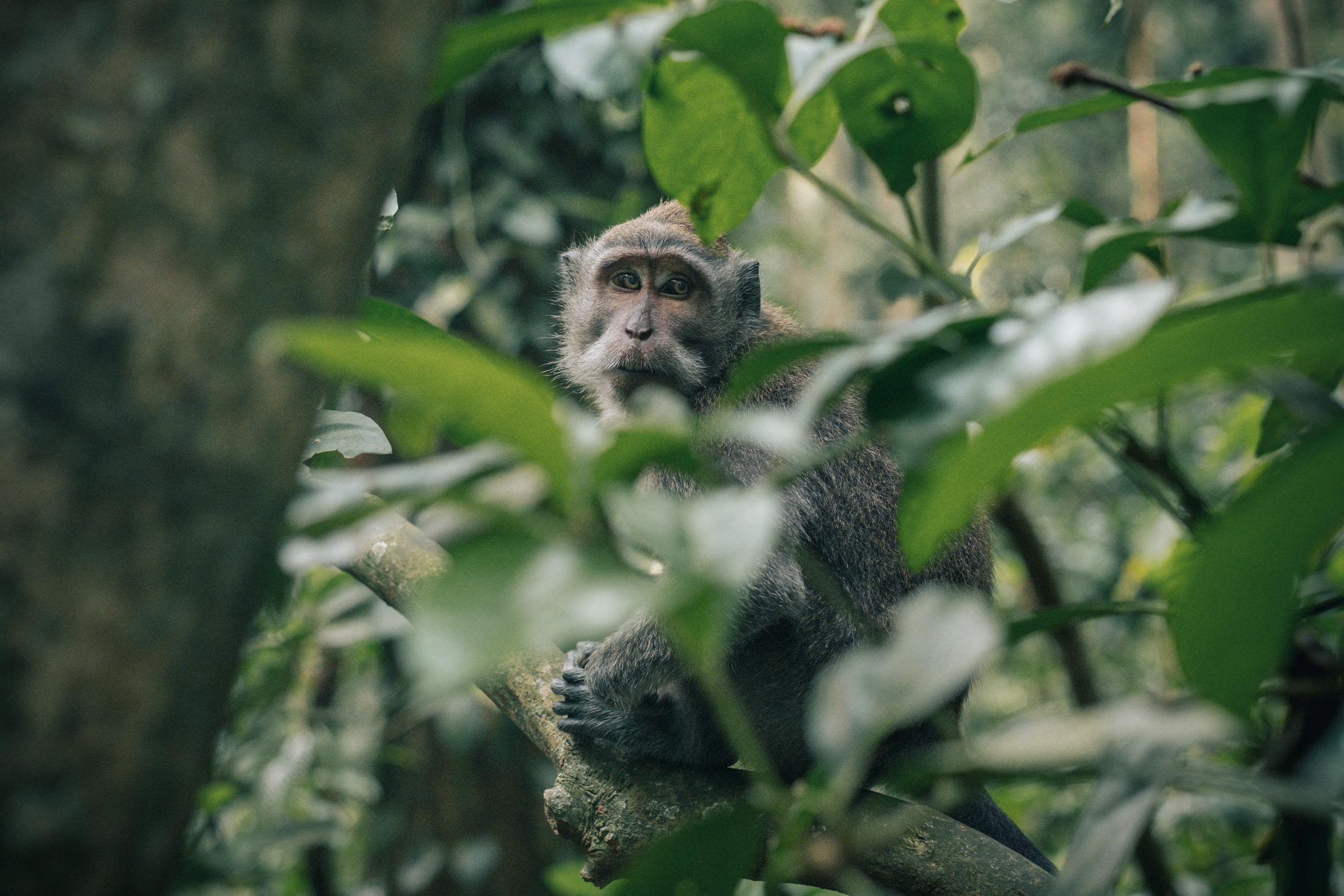 bali_day9_monkey-22.jpg