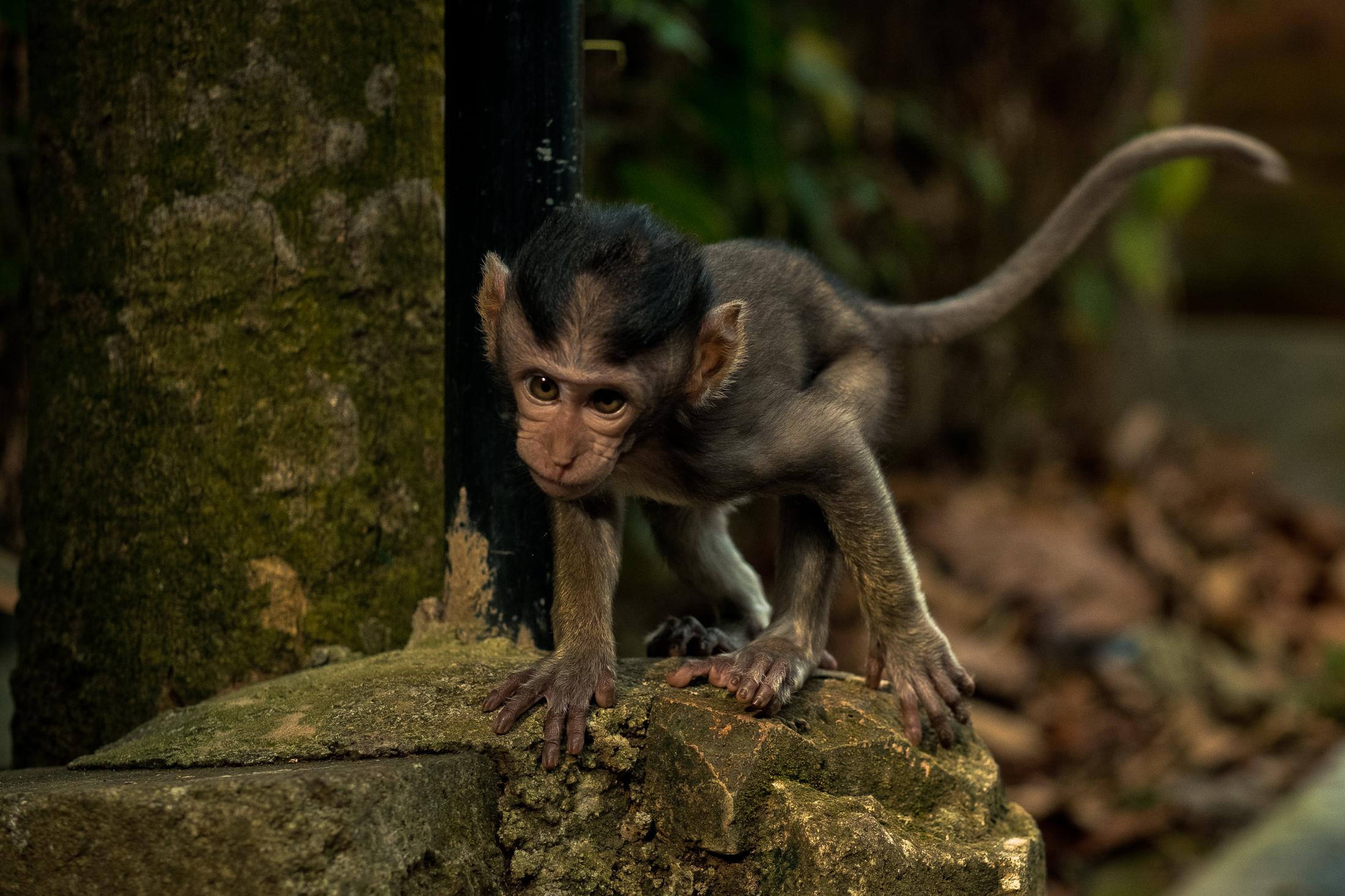 bali_day9_monkey-26.jpg