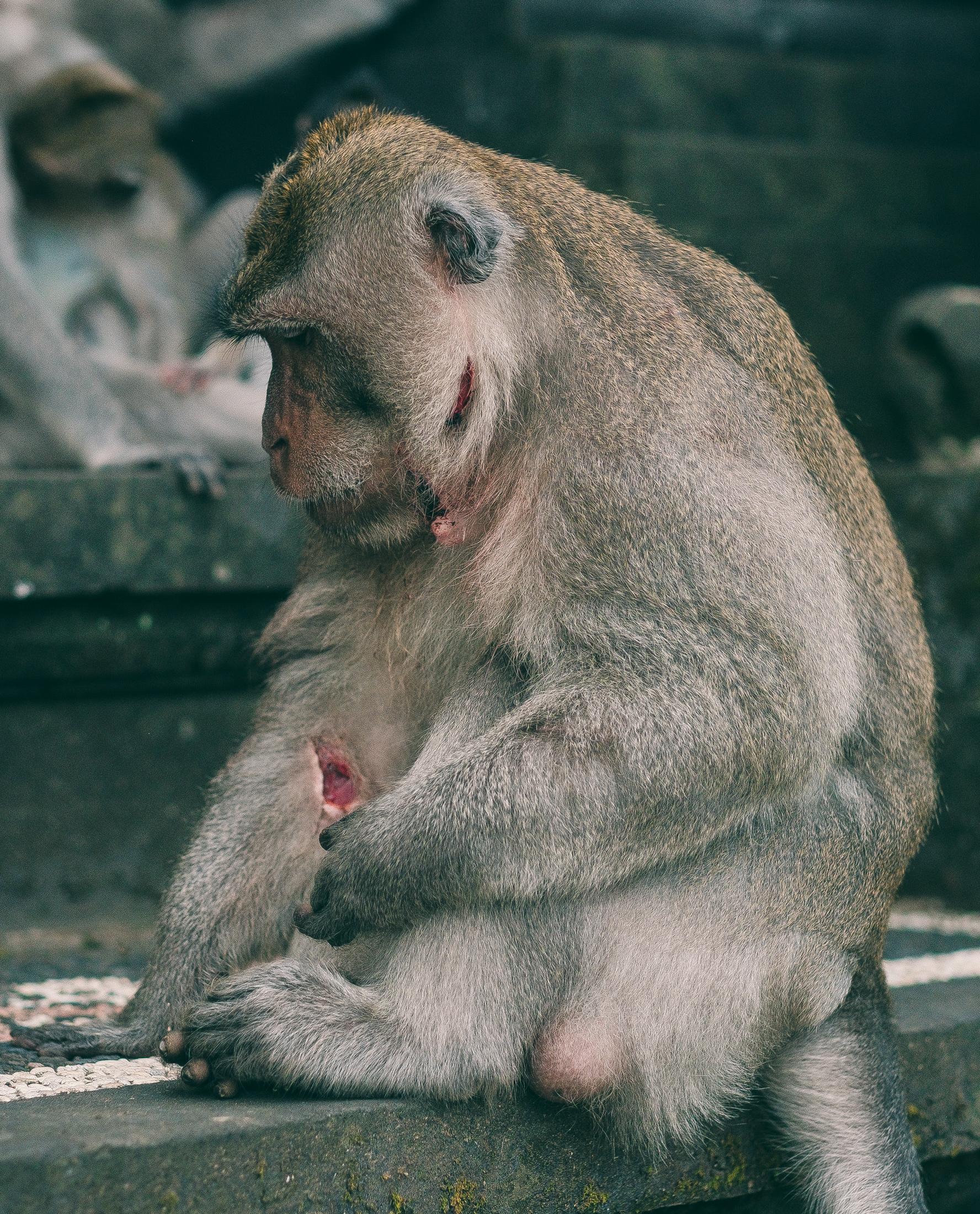 bali_day9_monkey-34.jpg