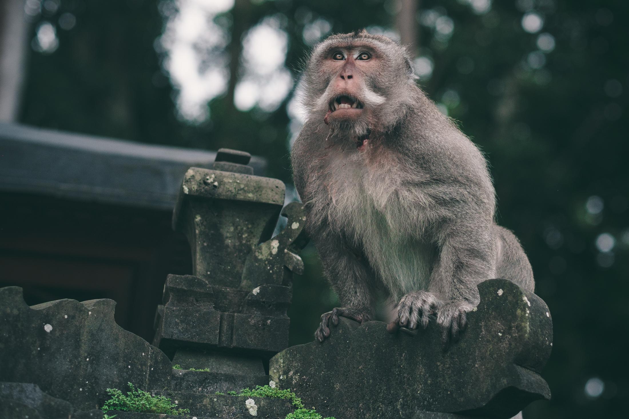 bali_day9_monkey-35.jpg