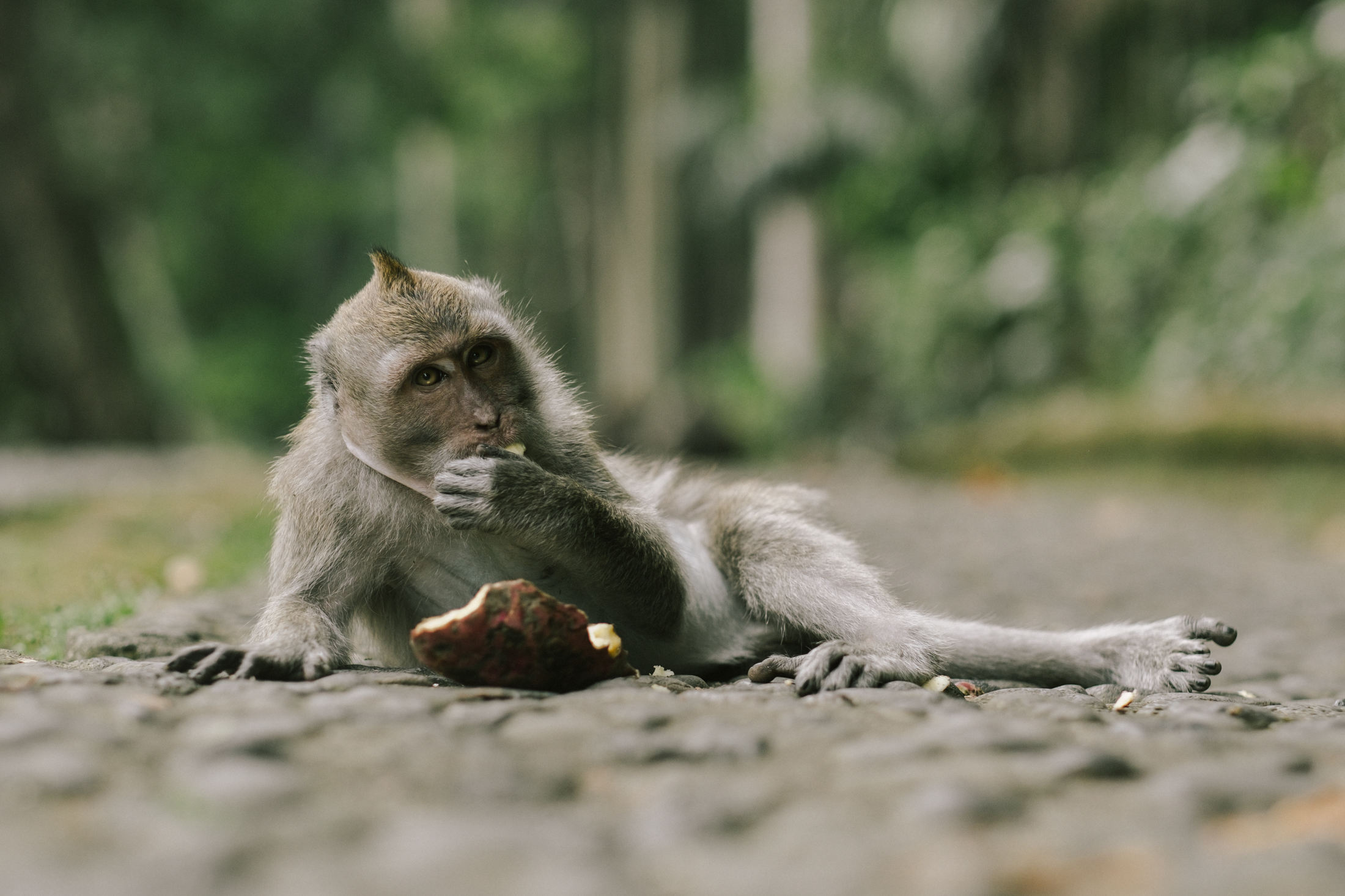 bali_day9_monkey-36.jpg