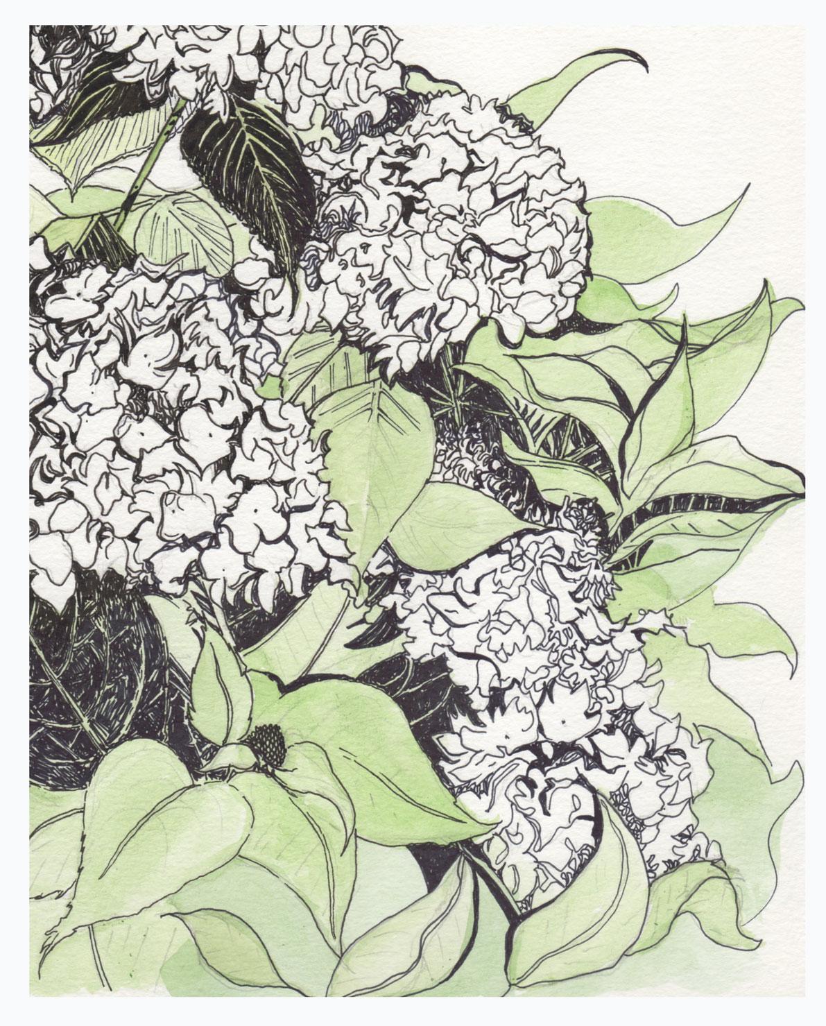 illustration205.jpg
