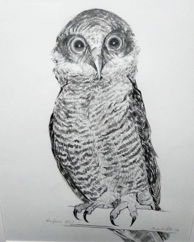 Owl drawing 2: the Rufous Owl!  #pencil #drawing #art #owls #owl
