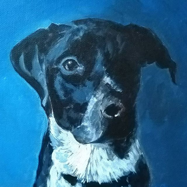 Tux  Acrylic on canvas, 8x8, 2018  #petportrait #dogportrait #art #stpaulartist #acrylicpainting #painting