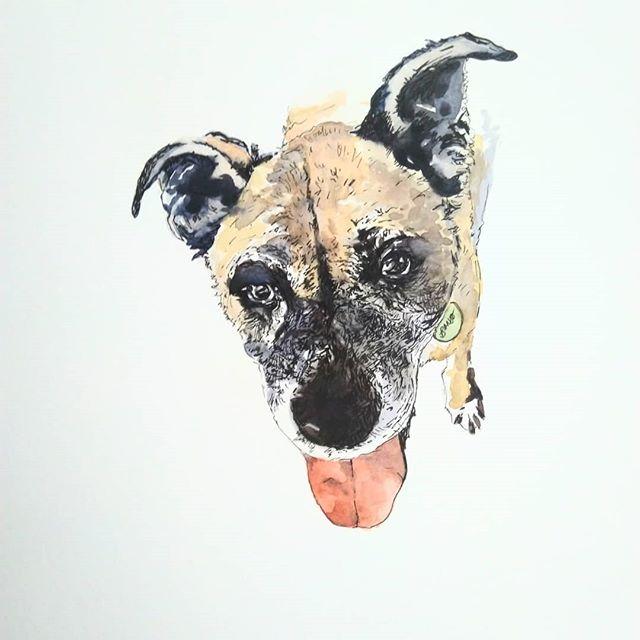 """Da Banjo"" Watercolor & pen illustration 5x7 image on 9x12 paper 💙💙💙 #petportraitartist #petillustration #mnartist #stpaulartist #stpaulartcrawl #otaartist #acvrwarehouse #dogportrait"