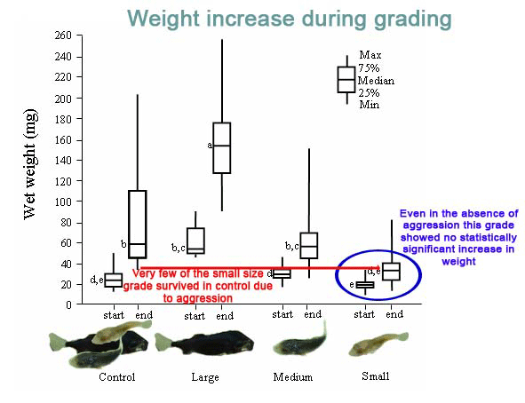 Change in average individual weight over the grading trial. Some fish were grown with indviduals of a similar size, others were grown in a mix of size classes.