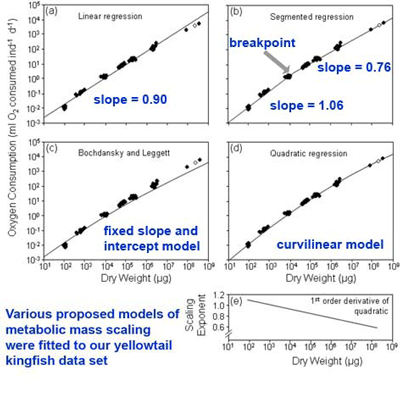Kingfish-metabolic-scaling.png